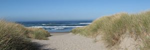 oregon-coast-manzanita